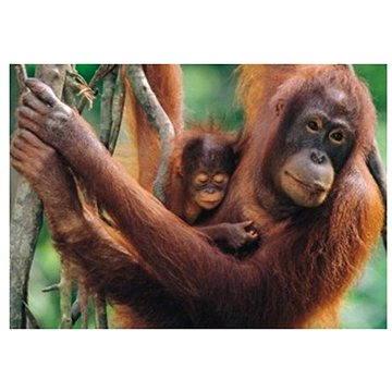 Dino Orangutani