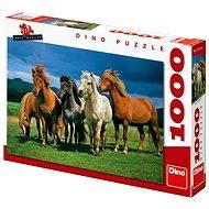 Dino Islandští koně