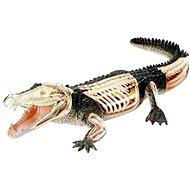 Revell X-ray SnapKits krokodýl