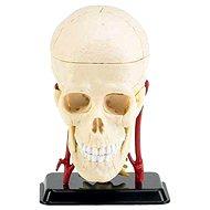 Revell X-ray SnapKits model lidské lebky