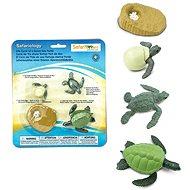 Životní cyklus - Mořská želva