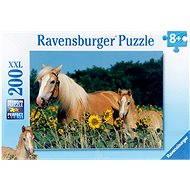 Ravensburger Koně na louce