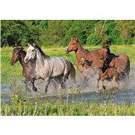 Dino Stádo koní