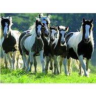 Ravensburger Divoké koně