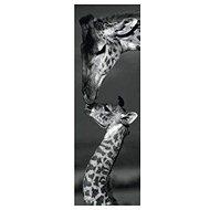 Dino Žirafy panoramatické